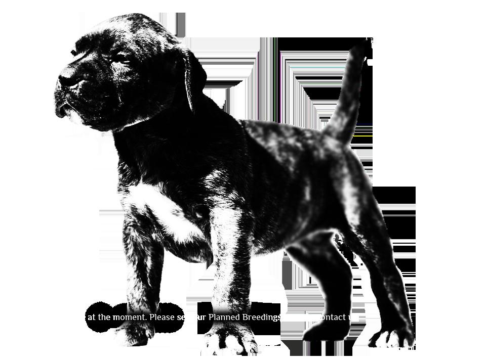 no puppies copy