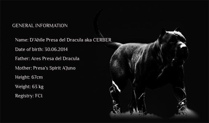 Cerber | presa canario male